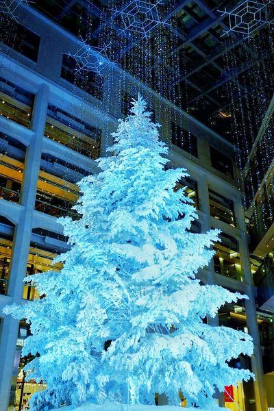 Showcase: December Christmas Tree KITTE Tokyo,Japan Best Christmas Lights