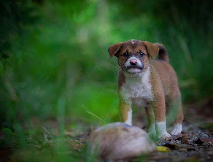 """""""Hey! you... are you talking to me?"""" Dog Pets No People Domestic Animals Animal Themes Canon Photography Canon_official One Animal Animal"""