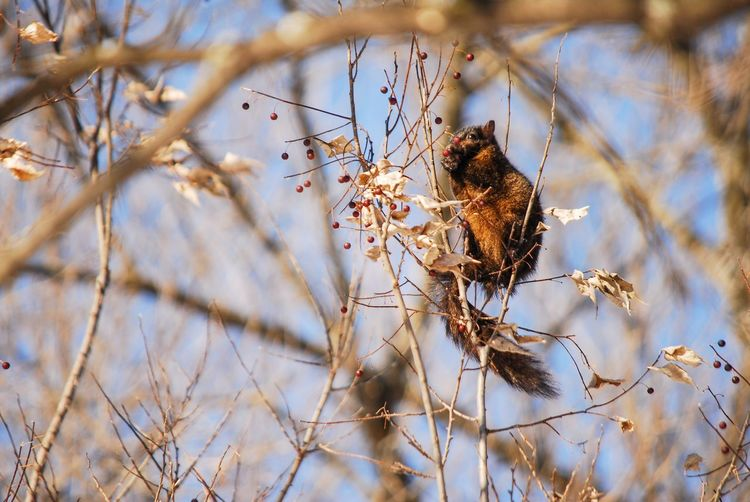 Squirrel views Plant Animal Wildlife Animals In The Wild Animal Themes Branch Tree Animal Fragility Nature Day Flowering Plant Flower No People One Animal Perching Bird Vulnerability  Selective Focus Beauty In Nature Close-up Outdoors