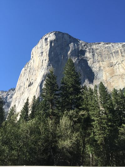 Mountain Tree Plant Sky Beauty In Nature Scenics - Nature Mountain Range Nature Tranquil Scene Tranquility Clear Sky Land Rock Growth Low Angle View Non-urban Scene Environment Forest Outdoors Mountain Peak Formation Pine Tree Coniferous Tree El Capitan Yosemite National Park