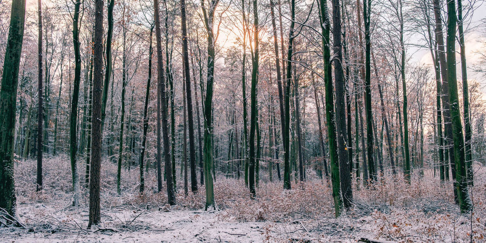 Among the frozen trees. [58/365] 2016.12.06 Beauty In Nature Branch Cold Cold Temperature Day Forest Frozen Growth Landscape Nature No People Outdoors Panoramic Scenics Serene Sky Snow Tranquil Scene Tranquility Tree Tree Trunk Winter Winter WoodLand