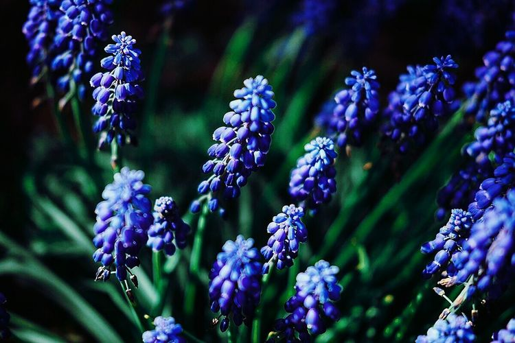 Purple Flower Nature Summer Outdoors Photographer альметьевск Vscocam Midifoto Fujifilm Russia Fuji Россия фотограф Teamfuji Flowers Macro макро