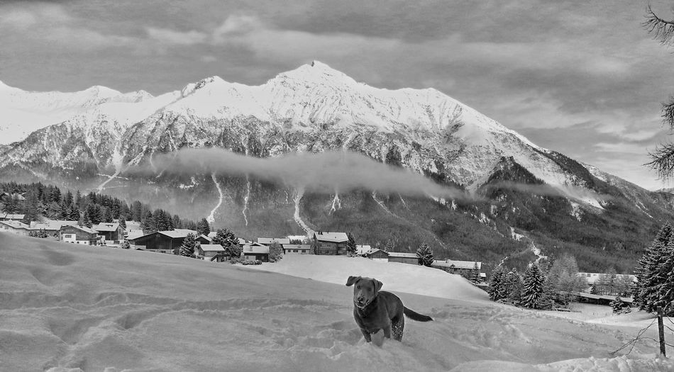 Dog on snow covered field against mountain