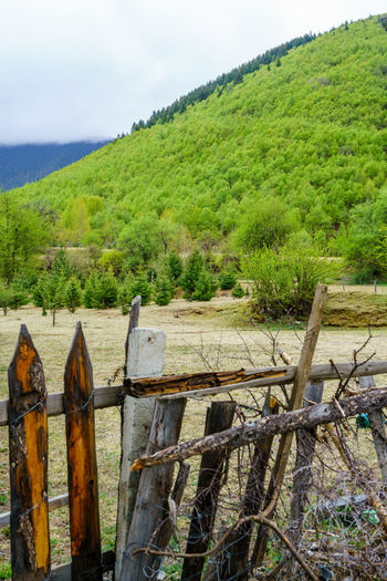 Fence by trees on landscape against sky