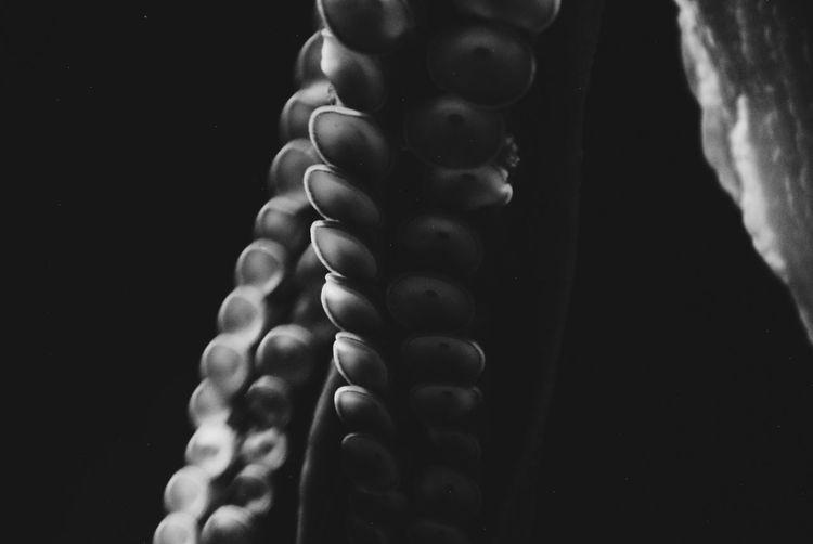 Black & White Sealife VSCO Aquarium Black Background Close-up Minimal Minimalism Octopus Vscofrance Water