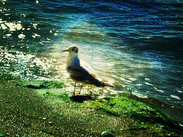 Glitch Playing With Effects Light And Shadow Seaside Reflection Nature Seagull Azovsea Berd Relaxing