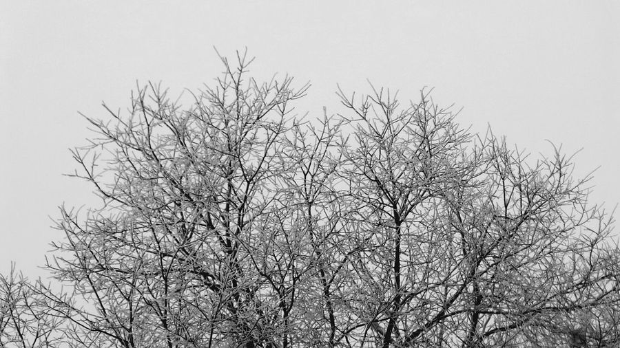 Tree Bare Tree Branch Nature Sky No People Low Angle View Outdoors Beauty In Nature Snowing Frosted Branches Abstract Nature Backgrounds Frost Frozen Abstract Photography Full Frame Abstractions In BlackandWhite Blackandwhite Black And White Collection  Frosty Mornings Low Angle View Snow Cold Temperature Nature