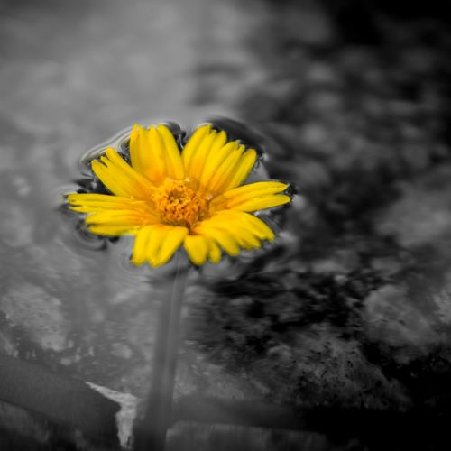 Colorsplash Flowers Flowerporn Nature Nature_collection Yellow Flower Yellow Photography