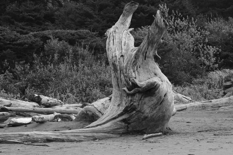 Beach Photography Black & White Driftwood Beach Logstash Outdoors Pacific Rim National Park Raggedy Tree Trunk
