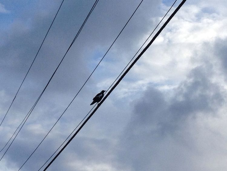 Bird Bird Bird Photography Birdphotography Sky Outdoors Taking Photos Cable Cable Line Black Bird Black