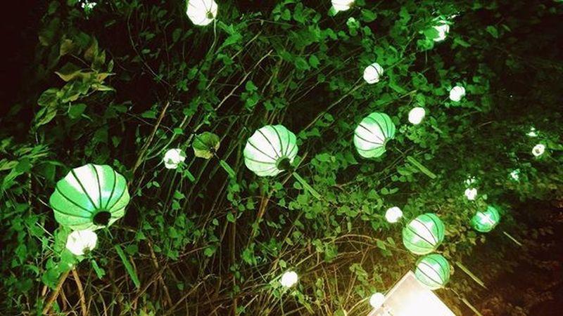Tết Nguyên Tiêu 🎐 VSCO Vscocam Vscovietnam Hoian  Hoian  Tếtnguyêntiêu Lantern Lồngđèn Sogreen