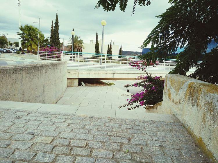 Pta Andalucia Malaga Puente Bridge Winter Showcase: January January2016 Enero Invierno