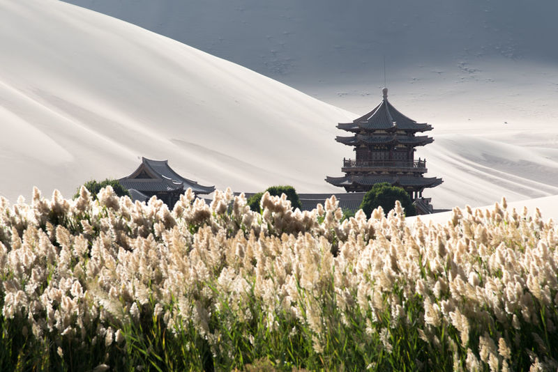 The Singing Sand Dunes of Dunhuang, Gansu, China ASIA Architecture Dessert Gobi Desert Silk Road Architecture Asian Design Beauty In Nature Building Exterior Built Structure China Day Flower Fragility Freshness Gansu Growth Landmark Nature No People Outdoors Religion Sky Spirituality Tree