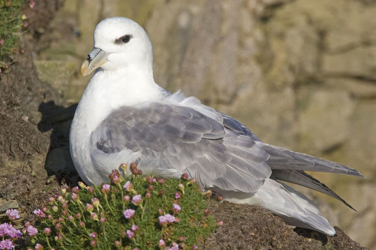 Close-up of seagull perching on a plant