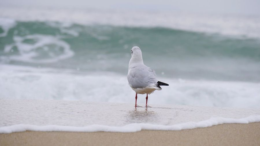 보다 보다 Look See Sea Wave Gull Seagull White Brid Whitebrid Love Sad (null)One Animal Sea Bird Beach Water Photo Foto