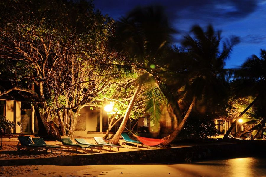 Night Tree Tranquil Scene Vacations Lens Flare Illuminated In Front Of land bungalow Colour Of Life Taking Photos Eyeem