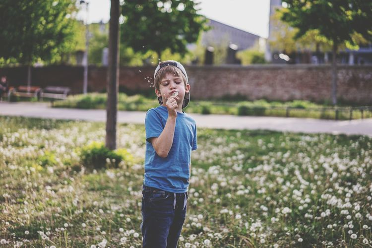 Boy blowing dandelion seed while standing at park