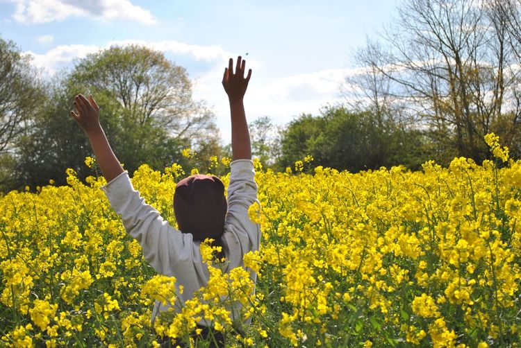 Rear view of woman with arms raised standing amidst yellow flowers on field against sky during sunny day
