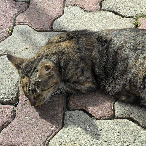 Soninho bom Manhadesol Morning Sun Cat recnov riodejaneiro