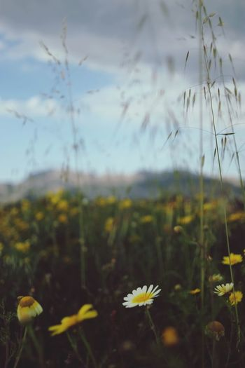 Close-up Outdoors Flower Nature Beauty In Nature Fragility Plant No People Sky Day Flower Head Tranquility Bokeh Photography Scenics EyeEmNewHere Dof Plant First Eyeem Photo Backgrounds Bokeh Agriculture Travel Farm Vacations Fujifilm