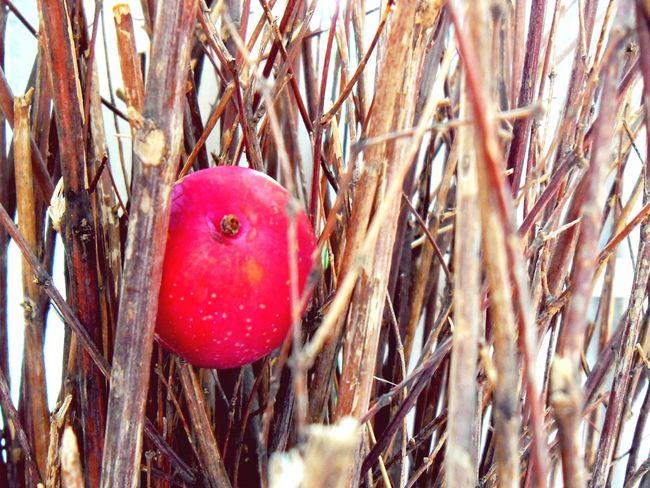 Taking Photos EyeEm Best Edits Flawers Plants Fruit Ixtapaluca Enjoying Life