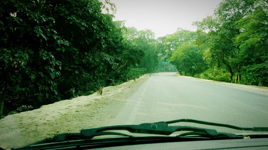 On The Road Roadtrip Roadscenes Bending Roads Trees Treescollection Treescape What does the trees and the bending road holds for us ahead? Howyoucelebrateholidays by taking a Relaxing EarlyCarTrip