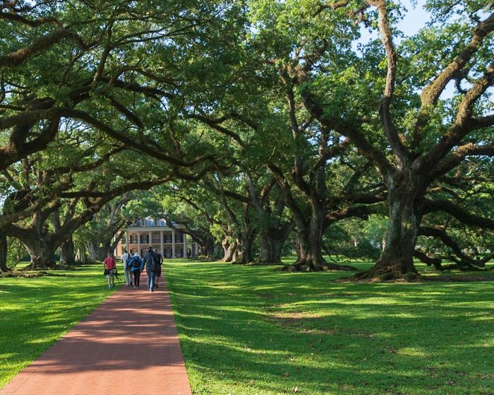Day New Orleans, LA Plant Tree Real People Women Park Nature Growth Green Color Outdoors