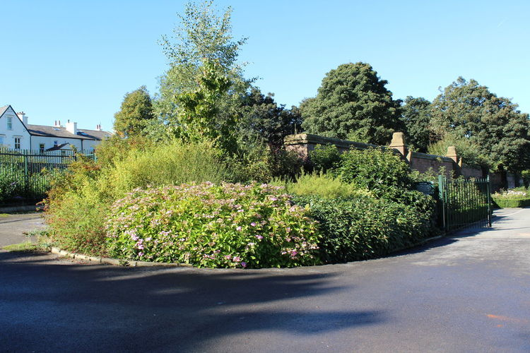 Nature @ Stanley Park! Beauty In Nature Clear Sky Day Flower Garden Path Grass Green Color Growth Nature No People Ornamental Garden Outdoors Plant Scenics Sky Sunlight Topiary Tranquil Scene Tree