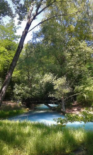 #emotions #peace #photography #serenity  Tree Nature Water Beauty In Nature Outdoors Green Color Tranquility No People Tranquil Scene