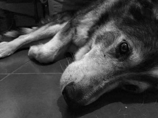 One Animal Dog Canine Animal Themes Mammal Animal Domestic Pets Domestic Animals Close-up Home Interior