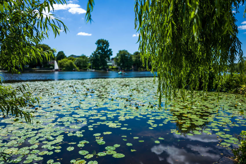 Hamburg Alster area Beauty In Nature Day Floating On Water Green Color Growth Lake Leaf Nature No People Outdoors Plant Plant Part Reflection Scenics - Nature Sky Swimming Pool Tranquil Scene Tranquility Tree Water Waterfront