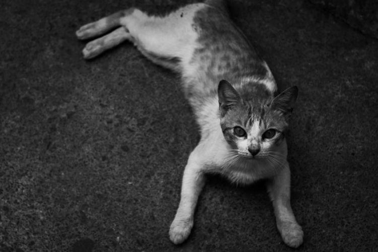 street cat Pets