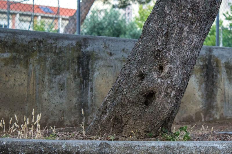 Bark Close-up I