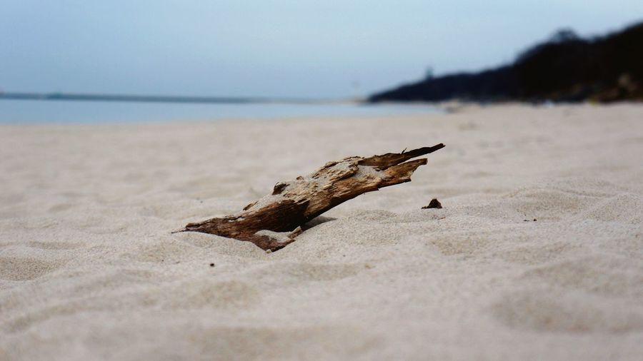 Close-up of driftwood at sandy beach