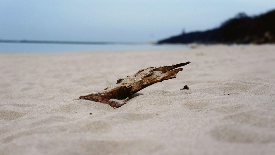 Close-Up Of Driftwood At Sandy Beach
