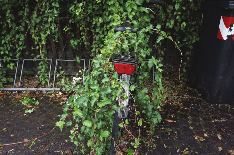 taking over the world Abandoned Autumn Autumn Colors Bicycle City Street Damaged Decay Formal Garden Green Green Color Greenery Growth Leaf Lush Foliage Messy Nature Obsolete Outdoors Plant Rainy Days Remote Solitude The Way Forward Urban Exploration Urban Landscape