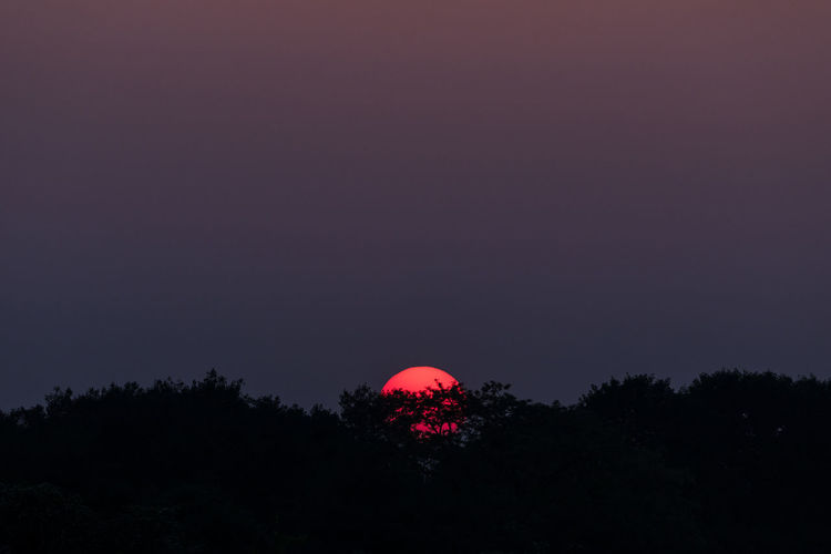 Silhouette of forest with red setting sun behind Circle Sphere Sunlight Beauty In Nature Color Gradient Copy Space Forest Idyllic Light - Natural Phenomenon Low Angle View Nature Night No People Non-urban Scene Outdoors Plant Purple Red Silhouette Sky Sunset Tranquil Scene Tranquility Tree
