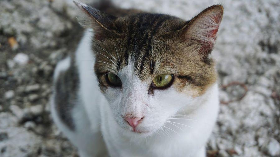 Cat face EyeEm