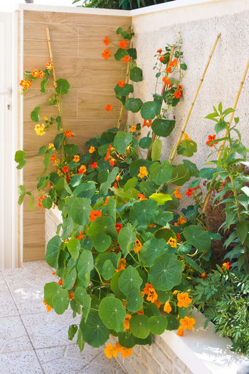 Plants growing on floor against wall