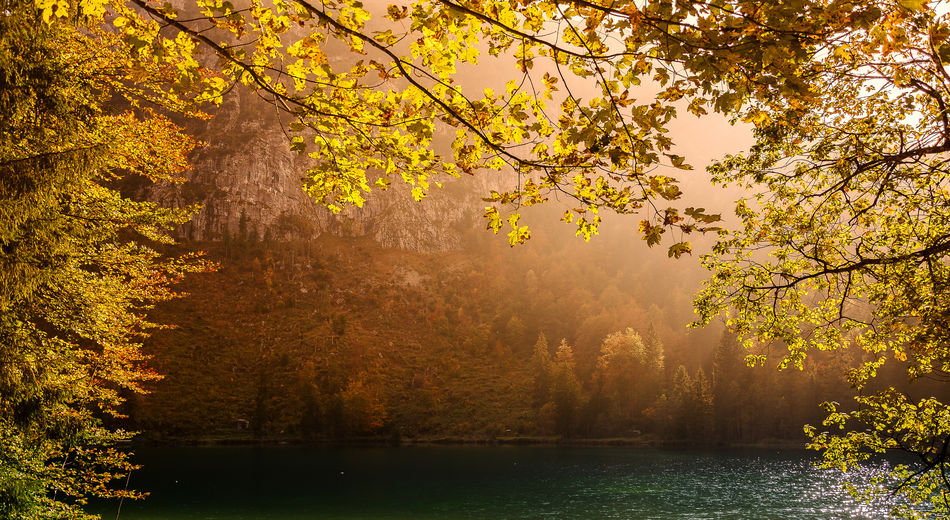 Frillensee Herbst Paint The Town Yellow Autumn Beauty In Nature Branch Day Fog Forest Growth Inzell Lake Landscape Leaf Mountain Nature No People Outdoors Scenics Sky Sunlight Tranquil Scene Tranquility Tree Water WoodLand Yellow