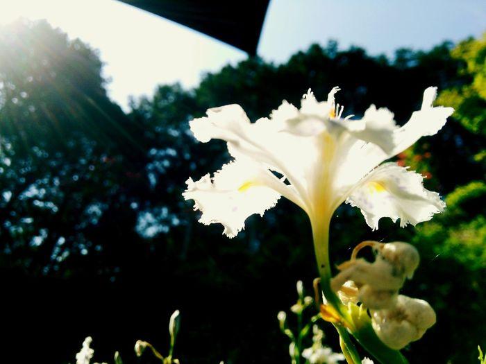 春の日差し The sunlight in spring. Flowers Light And Shadows Japanese Temple Saitama , Japan 花 Sunlight