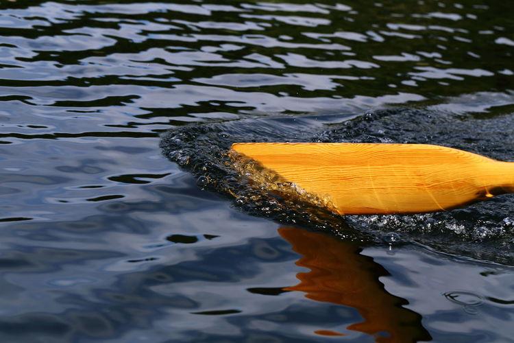 Cropped Image Of Oar In River