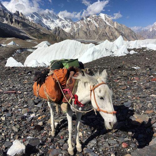 Trek Hike Snow Karakoram K2 Seracs Serac Ice Mule Mountain Snow