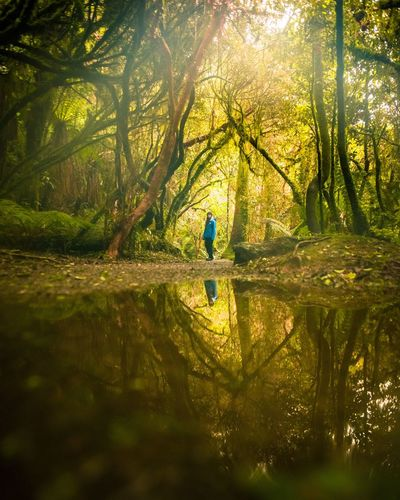 Reflection Of Woman And Trees On Puddle In Forest