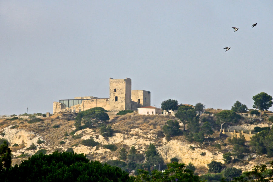 San Michele castle Cagliari, Sardinia Castle Ancient Ancient Civilization Animal Themes Architecture Bird Building Exterior Built Structure Clear Sky Day Flying Fortress Highlights Hill History Nature No People Old Ruin Outdoors San Michele Sky Tree Pidgeons Flying Bird