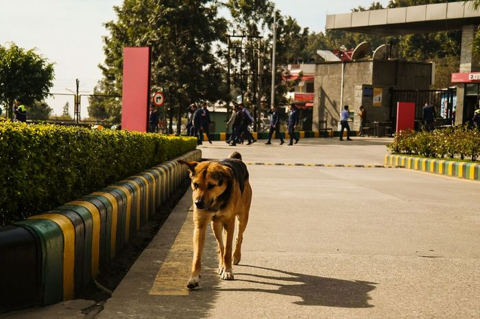 Dog One Animal City Animal Themes Street Animal Domestic Animals Outdoors No People Mammal Tree Pets Furry Friends Dogs Of EyeEm Wandering Around Wuff Stray Dog Streetphotography Stories From The City