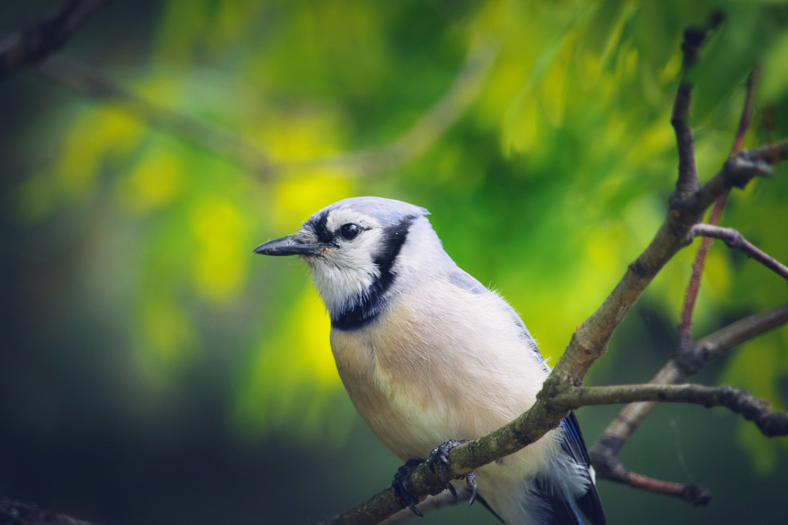 one animal, bird, animal themes, animals in the wild, focus on foreground, animal wildlife, day, perching, nature, outdoors, no people, close-up, great tit, branch, tree, beauty in nature