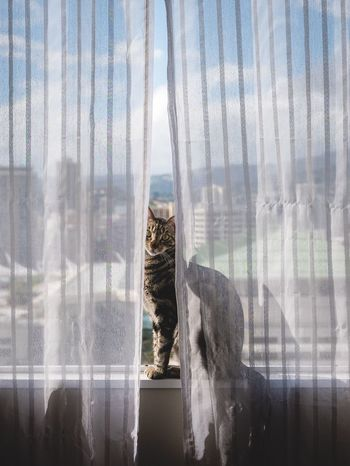 I'm back! Just got back from Vietnam with some amazing photographs. Can't wait to show you all. For now, this is my cat enjoying the beautiful Hawaii view. Shot with myLx1000 -tags:Check This OuttTaking PhotossRelaxinggEnjoying LifeeCattKittenssWindoww Cityscape Hawaii View Sky Beautiful