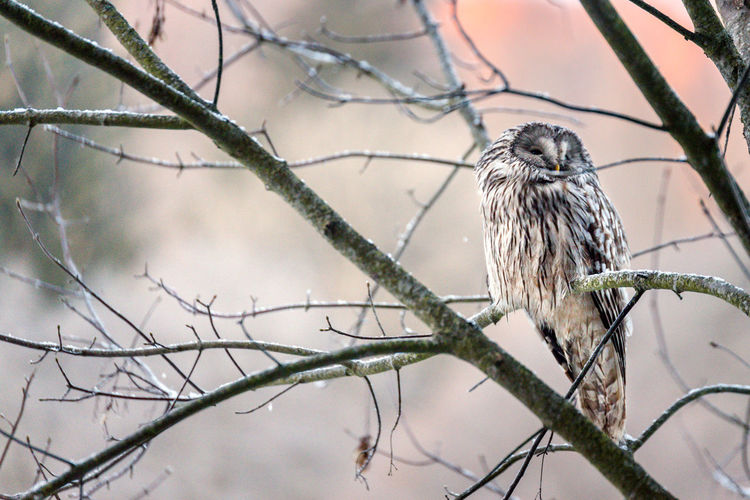Owl perching on branch