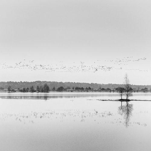 Lakescape Lake Birds Birdwatching Swarm Calm Black And White Landscape